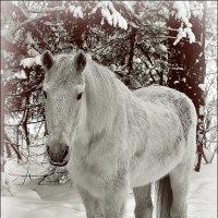 Портрет лошади в полный рост :: Дмитрий Конев