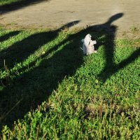 Идёт охота на Мыша, идёт охота... :: Ирина Данилова