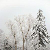 зимний пейзаж :: Tatyana Belova