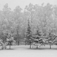 Вот она-зима... :: Олег Козлов