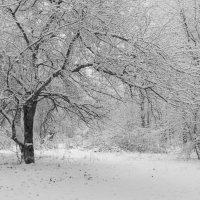 После снегопада. :: Олег Козлов