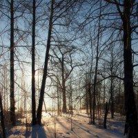 С первыми лучами зимнего солнца :: Николай Сапегин