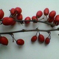 Плоды :: Миша Любчик