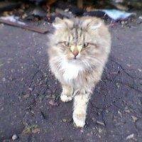 Кот из соседнего двора :: Миша Любчик