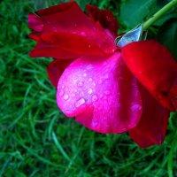 После дождя... :: Ирина