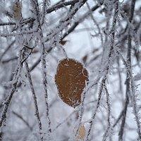 The first signs of winter :: Татьяна Кретова