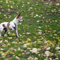 охота на листья :: Николай Алехин