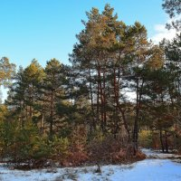 Легкий первый снег :: Ростислав