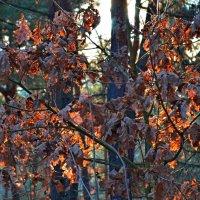 Оставшиеся листья :: Ростислав