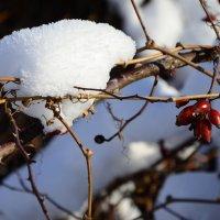 первый снег :: Ольга Степанова