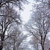 Белые снеги... :: Марина Волкова