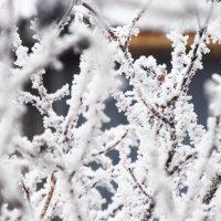 Мороз :: Emma Smit