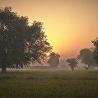 Индия :: Валерий Иванов