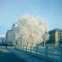 Деревце необычное:) :: Valeriya Voice