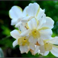 Цветы острова таиланд :: Юлия
