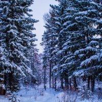 Зима в Сибири :: Светлана
