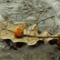 осень+ зима=весна....декабрь месяц....))) :: Михаил Жуковский