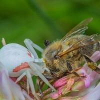 Жестокий мир насекомых :: Дмитрий Рутковский