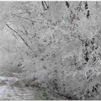 Зимнее утро,мороз и туман...2 :: Тамара (st.tamara)