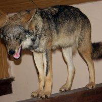Волк. :: Дмитрий Иншин