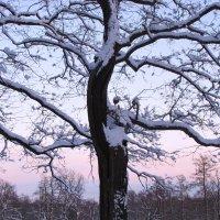 Морозным утром :: Самохвалова Зинаида