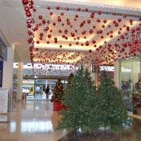 Рождественские ёлочки. :: zoja