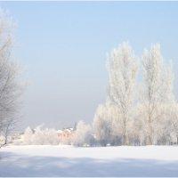 морозным утром :: Сергей Савич.