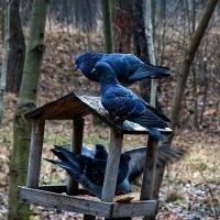 Лесные голуби :: Владимир Бровко