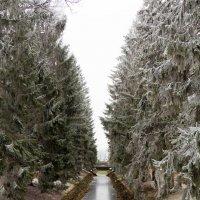 Холод :: Елена Троян