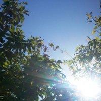 Солнца лучи :: Инна Буяновская