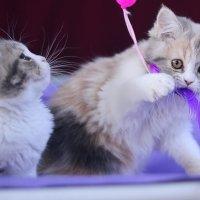 Игривые котята :: Евгений Печкин