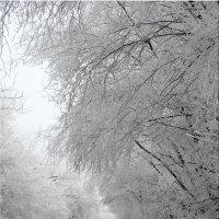 Зимнее утро,мороз и туман...3 :: Тамара (st.tamara)