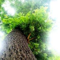 Дерево :: Инна Буяновская