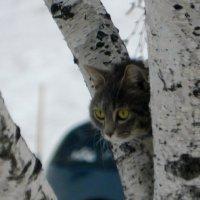 На дереве воздух свежее .и пульс в два раза увеличился. :: Николай Сапегин
