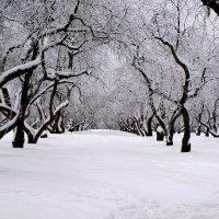 Яблони в снегу :: Николай Дони