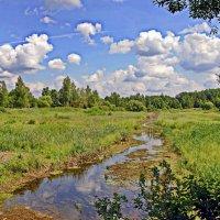 Летний  пейзаж. :: Валера39 Василевский.