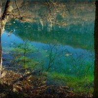 У озера! :: Владимир Шошин