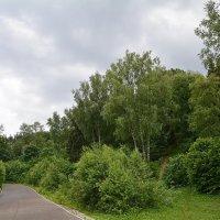 лес для прогулок :: Александр С.