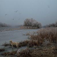 выход на лед :: Алена Рыжова