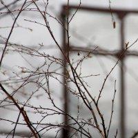 декабрь 2014... дождь... :: Валерия  Полещикова