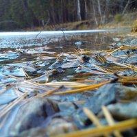 Берег озера :: оксана савина