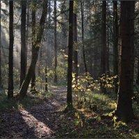 В лесу :: Надежда Лаврова