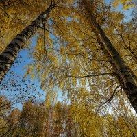 золото осени :: Алексей -