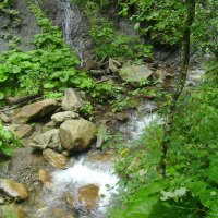 Горные  потоки  в  Карпатском  лесу :: Андрей  Васильевич Коляскин