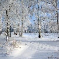 Зима  в  берёзовой  роще :: Геннадий С.