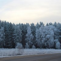 По дороге в сказочный лес. :: Маргарита ( Марта ) Дрожжина
