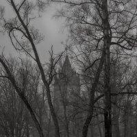 Среди деревьев :: Елизавета Вавилова