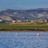 Не пугайте розовых фламинго... :: Вячеслав Мишин