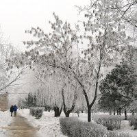 Прогулки по зиме :: Natali