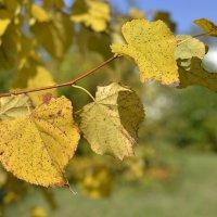 Жёлтые листья :: Дмитрий Конев